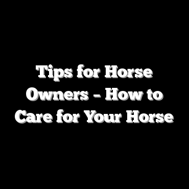 Tips for Horse Owners – How to Care for Your Horse
